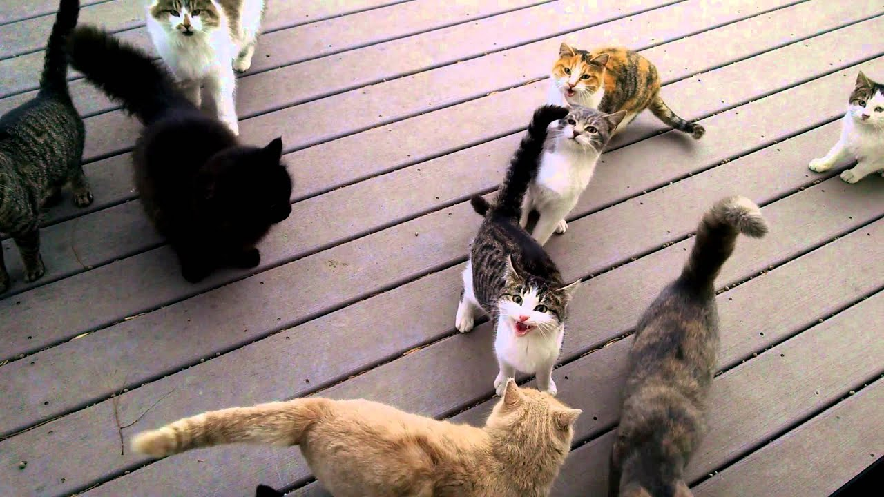 Ez történik, ha túl sokszor adunk enni a környékbeli cicáknak - videó