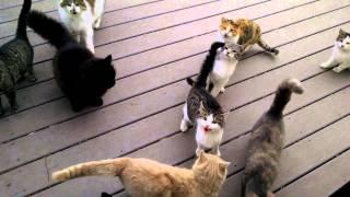 おはよう!毎朝外に出た瞬間に集まってる猫たちにキュン死
