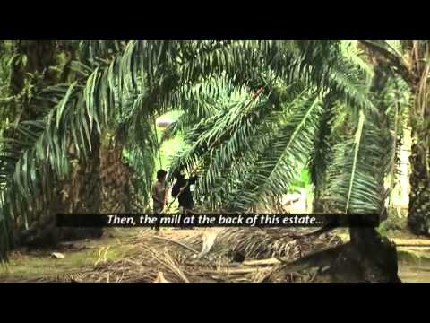 Life of an oil palm smallholder