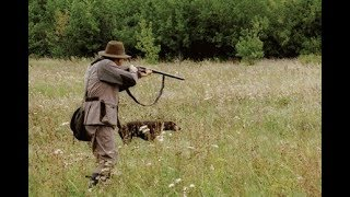 Hunting for partridge with dogs