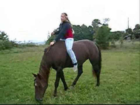 Pferd Reiten Ohne Sattel Reiten Ohne Sattel