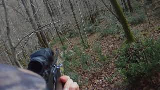 2017 01 29 : chasse au grand gibier : biche, daguet, faon, chevreuil