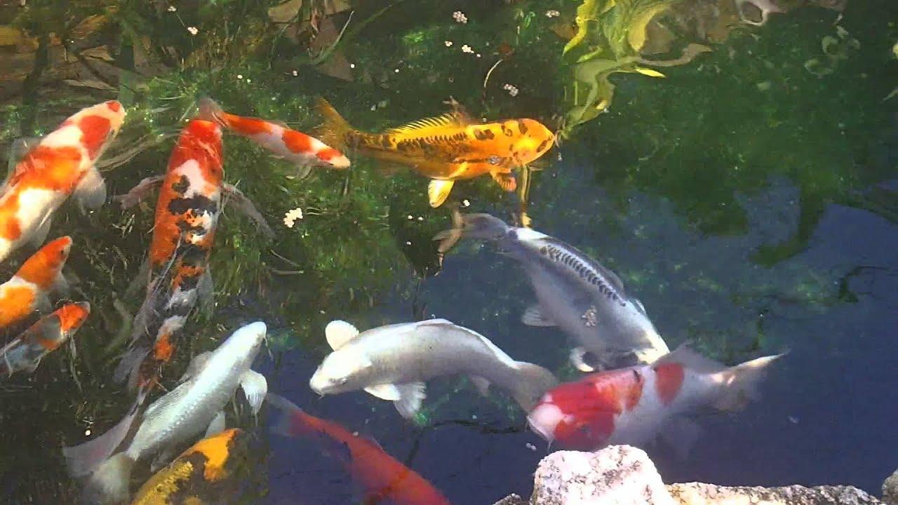 Jard n japon s 1 youtube for Estanques japoneses jardin