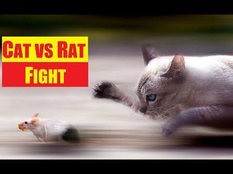 😺 Yeni Türk Oyunu - ( Kedi vs Fare ) Ratty Catty 😾