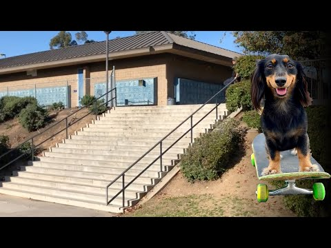 SKATEBOARDING DOG ROWDY VS THE EL TORO 20 STAIR & MUCH MORE !!! - NKA VIDS -