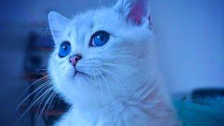 Cute Animals Compilation 2019    Animal Watching Magazine    AWM   