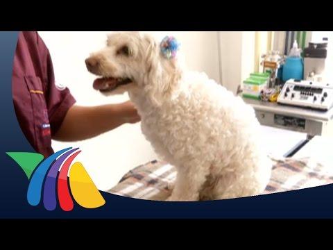 Hospital para mascotas ya es una realidad en Guanajuato | Noticias de Guanajuato