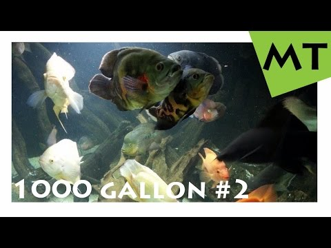 1000 Gallon  4000 Liter Private Monster Fish Tank - Germany