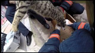 İtfaiye - Kedi Kurtarma