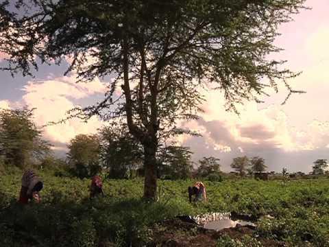 Hunger, malnutrition threaten Africa's economic gains, UN development agency warns