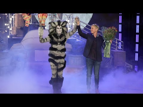 Average Andy Is Taking 'Cats' on the Road