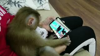 Monkey Baby Nui   One day of NUI ( play, eat, watch youtube and sleep )