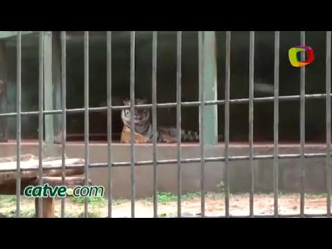 Tigre arranca el brazo a un niño en zoológico de Brasil