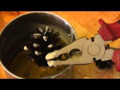 Как сделать сухое горючее из сосновых шишек