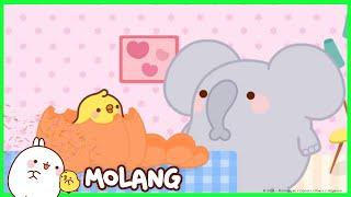 Molang - The Pumpkin | Cartoon for kids