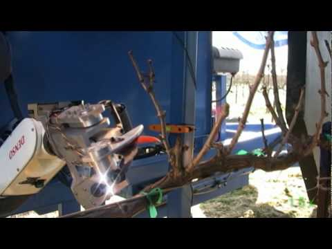 Vision Robotics Corp: Autonomous Grape-Vine Pruner (Phase 1)