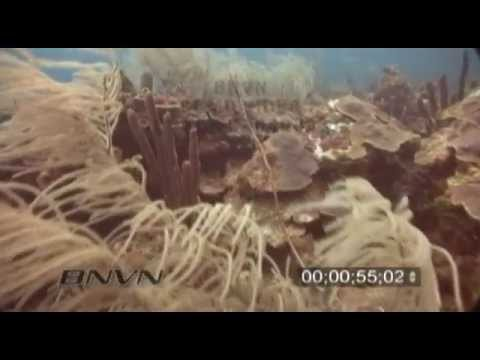 5/15/2004 Sherwood Forest Coral Reef Video From The Tortugas National Park