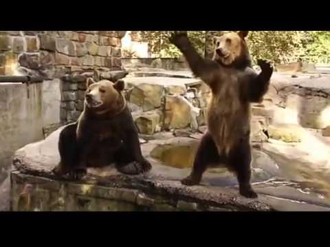 Смешное видео про животных онлайн
