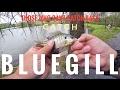 Those Who Can't Catch Bass Catch... Bluegill?? (Steele Creek Park 1080HD)