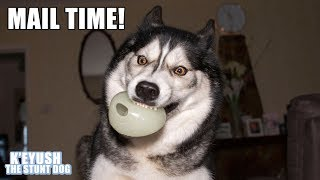 Finally Found A Ball My Husky Can Catch! | Mail Time!