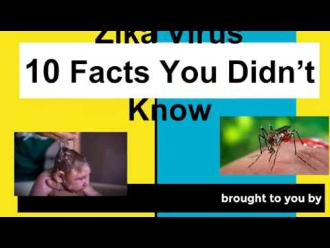 Zika Virus  10 Facts You Didn't Know
