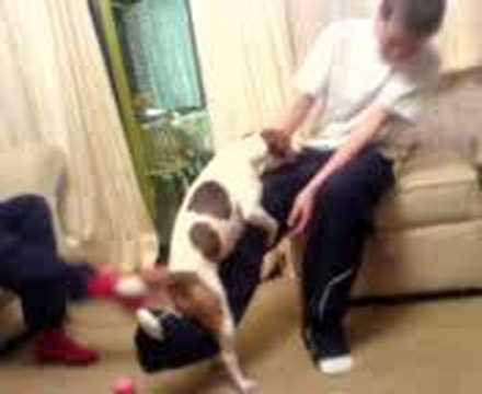 Dog Fucking Sam Blakes Leg!!! Sooo Funny U May Piss Urself video
