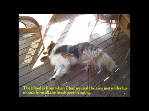 Tramadol Side Effects In Dogs There Are Also A Number Of That You Can Watch Out For So