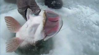 Fishinggeeks Hardwater Pike fishing