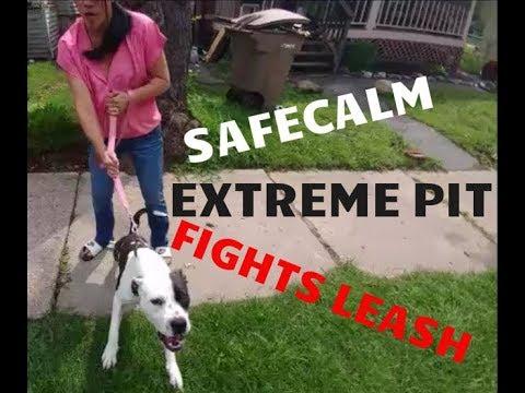 EXTREME PIT BULL FIGHTS LEASH - SafeCalm - Dog Whisperer BIG CHUCK MCBRIDE