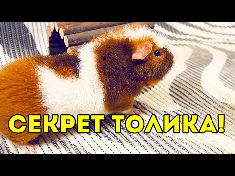 Секрет Толика / SvinkiShow