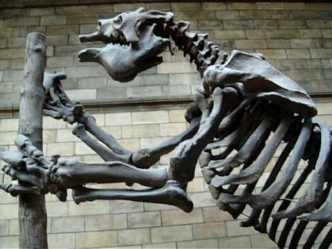 Natural History Museum -- Megatherium -- Giant Ground Sloth Video