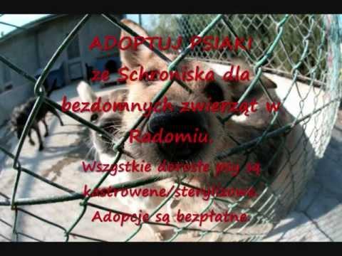 Pomóż Zmianiać ŚWIAT - KASIA&psy Ze Schroniska Dla Zwierząt Bezdomnych W Radomiu