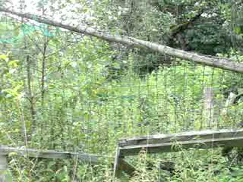Unser Garten 25.7.2011