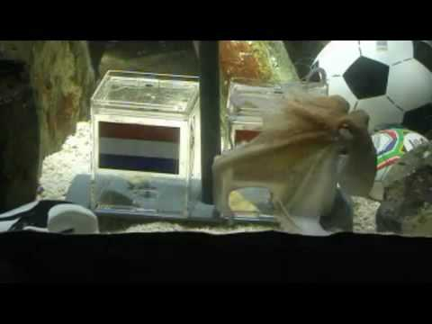 Paul the octopus predicts netherlands-spain FIFA WORLD CUP final 2010