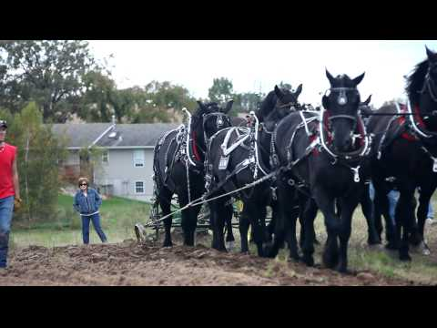 9 percherons pulling a 3 bottom John Deere plow pt 2