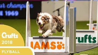 Flyball - Team Final | Crufts 2018