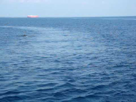 whale watching off Guatemala Pacific coast James swims with them.MPG