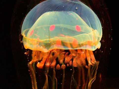 Koop - Jellyfishes