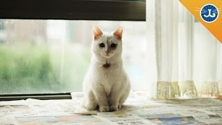 The ONE Thing You Should Know Before Adopting a Cat