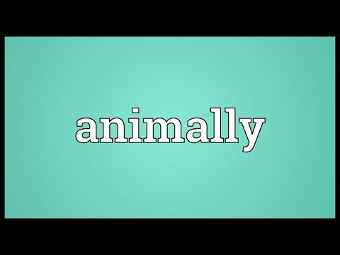 Header of animally