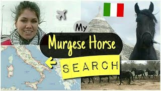 My MURGESE HORSE Search in Puglia ITALY! + ENGL SUBS