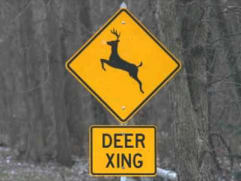 Deer Crossing Lady - Radio