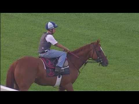 Wise Dan works at Keeneland