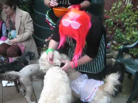 Portglenone Dog Wedding Boris+katie's Wedding Vows Xxx.mp4 video