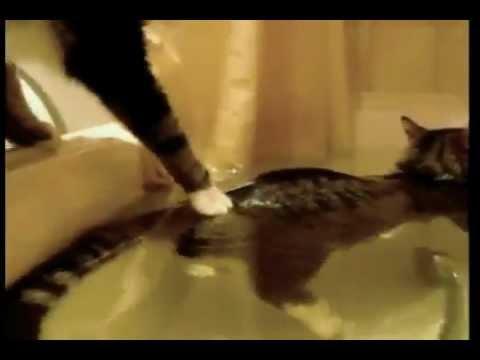 Кот принимает ванну