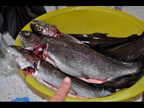 общество рыболовов сочи