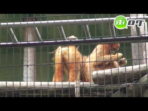 熊本市動植物園 - 地域情報動画サイト 街ログ