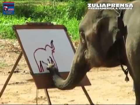 Videos de Animales Increíbles -  Suda la elefanteque le gusta pintar - Zulia Prensa / Prensamerica