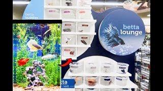 *NEW* BETTA's For Female SORORITY Fish TANK!