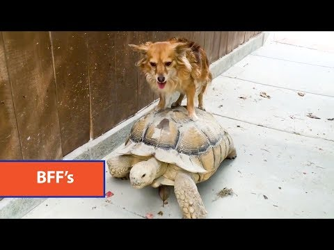 Funniest Unlikely Animal Friendships Compilation | Funny Pet Videos